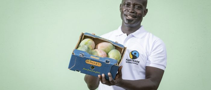 Varistor: Reportage in Ghana, Produktion bei der Firma Bomarts LTD bei Nsawam, getrocknete Mangos, Mango-Ernte, Ananas-Ernte im Januar 2018. (Bild Christoph Kaminski, kellenbergerkaminski.ch)